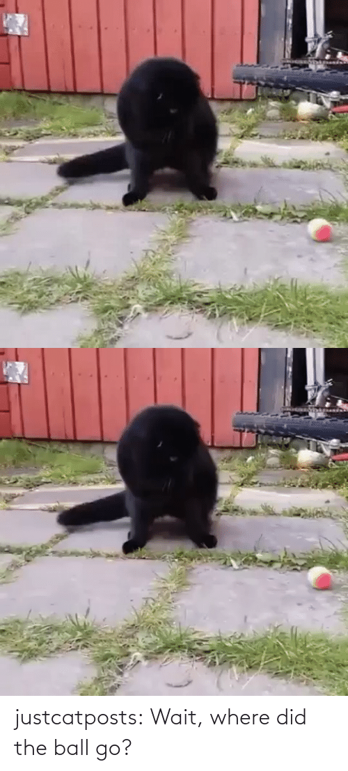 ball: justcatposts:  Wait, where did the ball go?