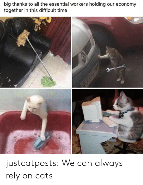 always: justcatposts:  We can always rely on cats