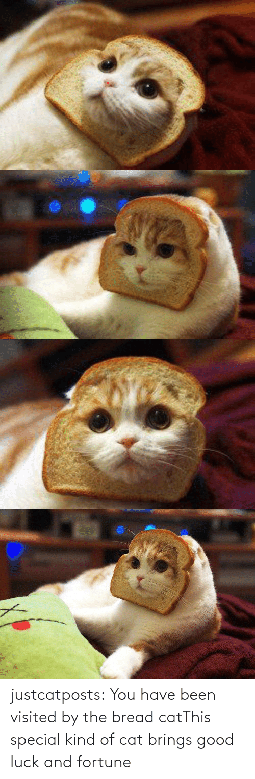 Luck: justcatposts:  You have been visited by the bread catThis special kind of cat brings good luck and fortune