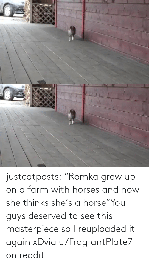 "Farm: justcatposts:  ""Romka grew up on a farm with horses and now she thinks she's a horse""You guys deserved to see this masterpiece so I reuploaded it again xDvia u/FragrantPlate7 on reddit"