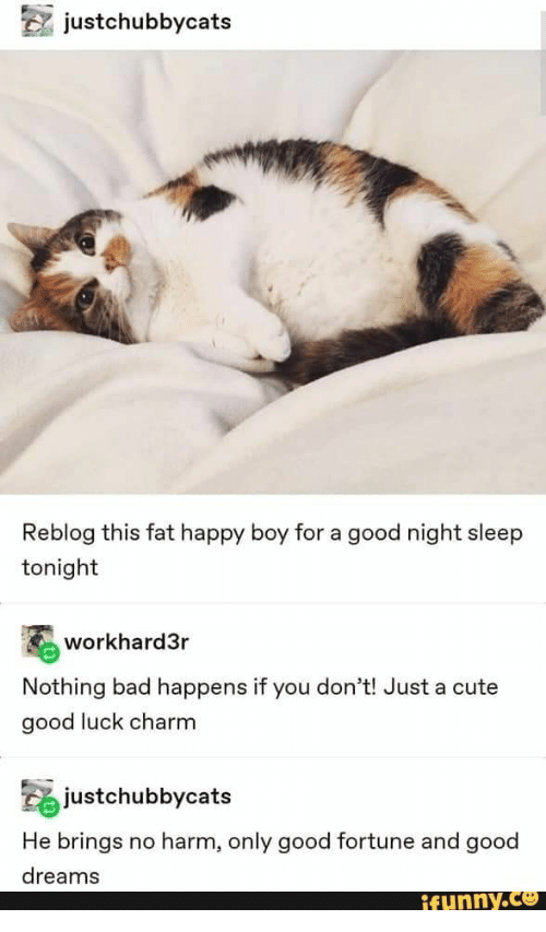 Bad, Cute, and Good: justchubbycats  Reblog this fat happy boy for a good night sleep  tonight  workhard3r  Nothing bad happens if you don't! Just a cute  good luck charm  justchubbycats  He brings  no harm, only good fortune and good  dreams  ifunny.co