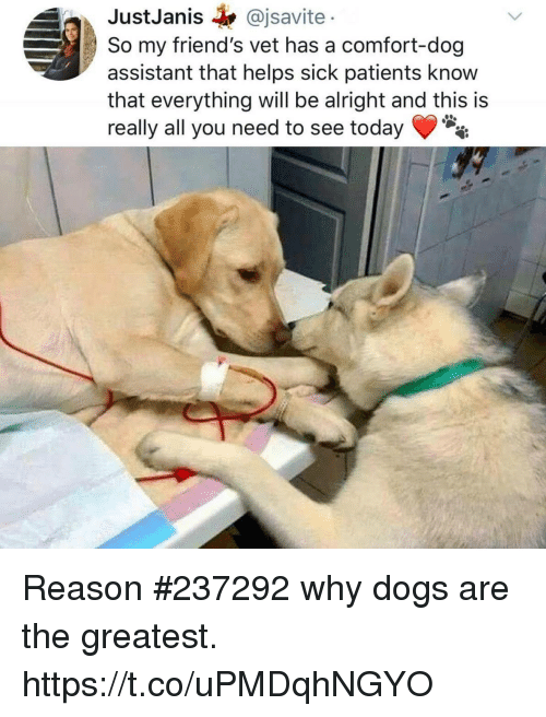 Dogs, Friends, and Funny: JustJanis @jsavite  So my friend's vet has a comfort-dog  assistant that helps sick patients know  that everything will be alright and this is  really all you need to see today Reason #237292 why dogs are the greatest. https://t.co/uPMDqhNGYO