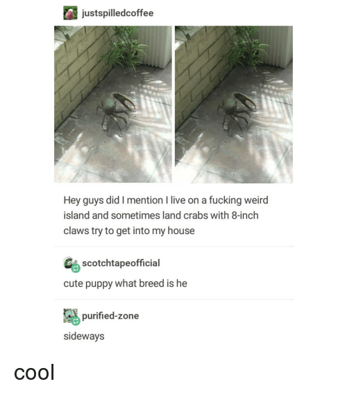 Cute, Fucking, and My House: justspilledcoffee  Hey guys did I mention I live on a fucking weird  island and sometimes land crabs with 8-inch  claws try to get into my house  Gs scotchtapeofficial  cute puppy what breed is he  purified-zone  sideways cool