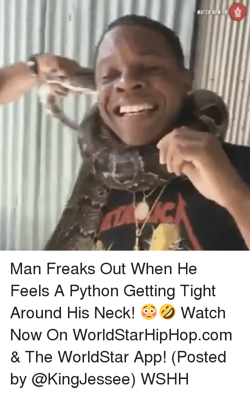 The Worldstar: K31LYB Man Freaks Out When He Feels A Python Getting Tight Around His Neck! 😳🤣 Watch Now On WorldStarHipHop.com & The WorldStar App! (Posted by @KingJessee) WSHH