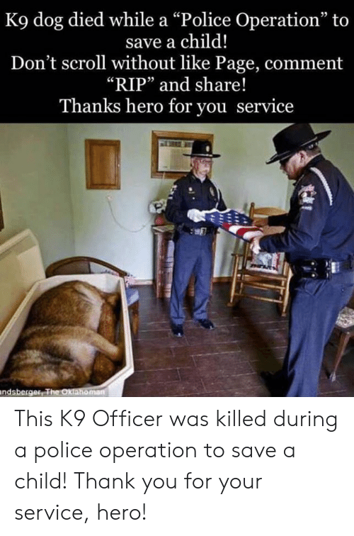 "Memes, Police, and Thank You: K9 dog died while a ""Police Operation"" to  save a child!  Don't scroll without like Page, comment  ""RIP"" and share!  Thanks hero for you service  05  鷢  ndsberger This K9 Officer was killed during a police operation to save a child!    Thank you for your service, hero!"