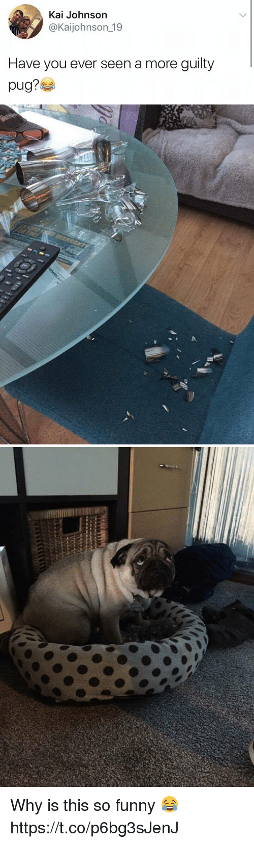 Pugly: Kai Johnson  @Kaijohnson 19  Have you ever seen a more guilty  pug? Why is this so funny 😂 https://t.co/p6bg3sJenJ