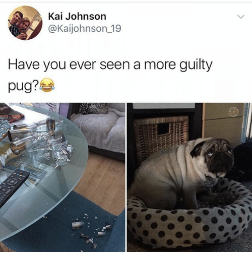Pugly: Kai Johnson  @Kaijohnson 19  Have you ever seen a more guilty  pug?
