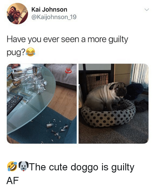 Af, Cute, and Memes: Kai Johnson  @Kaijohnson_19  Have you ever seen a more guilty  pug?부 🤣🐶The cute doggo is guilty AF