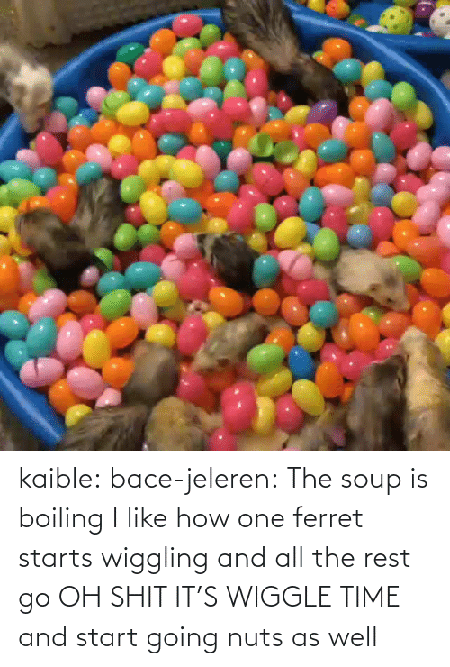 All The: kaible: bace-jeleren: The soup is boiling    I like how one ferret starts wiggling and all the rest go OH SHIT IT'S WIGGLE TIME and start going nuts as well