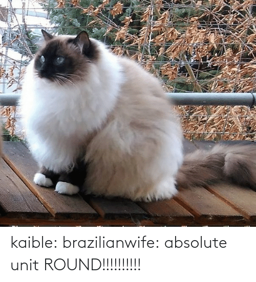 Absolute: kaible: brazilianwife: absolute unit ROUND!!!!!!!!!!