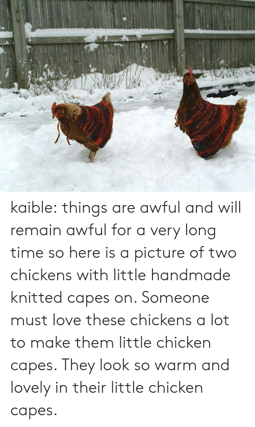Love, Tumblr, and Blog: kaible:  things are awful and will remain awful for a very long time so here is a picture of two chickens with little handmade knitted capes on. Someone must love these chickens a lot to make them little chicken capes. They look so warm and lovely in their little chicken capes.