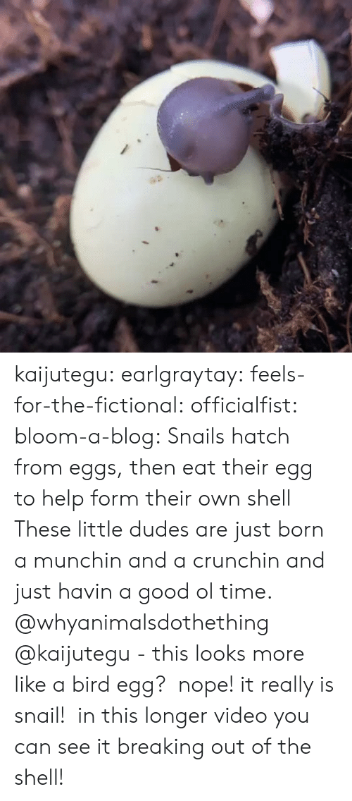 provider: kaijutegu: earlgraytay:  feels-for-the-fictional:  officialfist:  bloom-a-blog:  Snails hatch from eggs, then eat their egg to help form their own shell  These little dudes are just born a munchin and a crunchin and just havin a good ol time.    @whyanimalsdothething @kaijutegu - this looks more like a bird egg?   nope! it really is snail!  in this longer video you can see it breaking out of the shell!