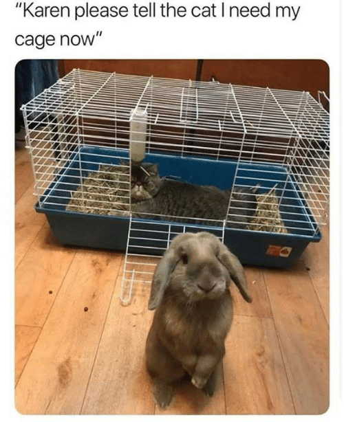 """Memes, 🤖, and Cat: """"Karen please tell the cat I need my  cage novW"""