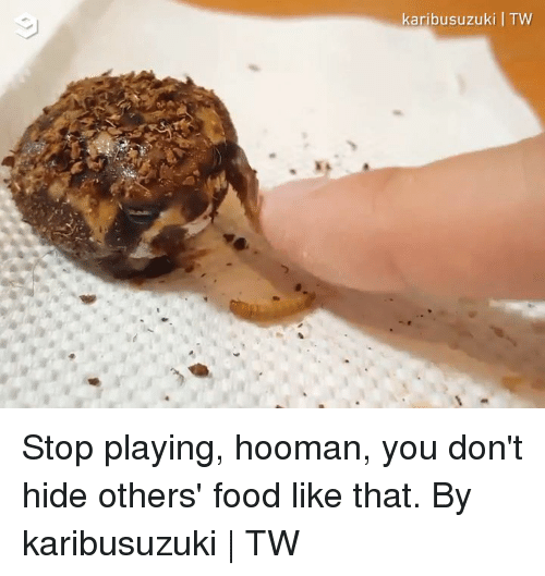 Dank, Food, and 🤖: karibusuzuki I TW Stop playing, hooman, you don't hide others' food like that.  By karibusuzuki | TW
