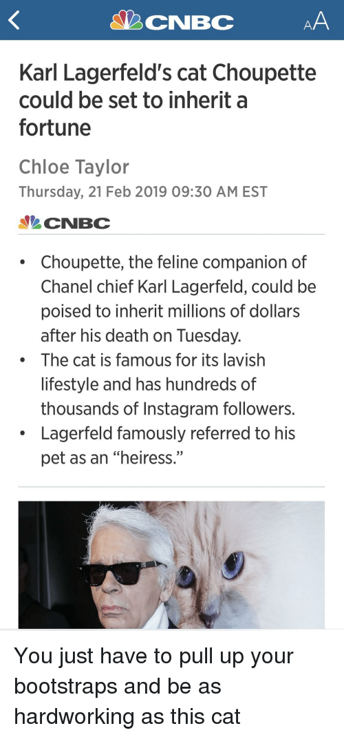 """Instagram, Chanel, and Death: Karl Lagerfeld's cat Choupette  could be set to inherit a  fortune  Chloe Taylor  Thursday, 21 Feb 2019 09:30 AM EST  CNBC  Choupette, the feline companion of  Chanel chief Karl Lagerfeld, could be  poised to inherit millions of dollars  after his death on Tuesday  The cat is famous for its lavish  lifestyle and has hundreds of  thousands of Instagram followers.  Lagerfeld famously referred to his  pet as an """"heiress."""""""