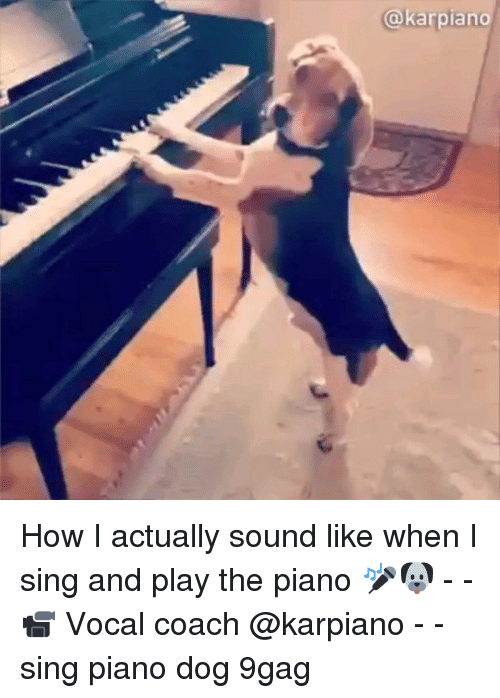 9gag, Memes, and Piano: @karpiano How I actually sound like when I sing and play the piano 🎤🐶 - - 📹 Vocal coach @karpiano - - sing piano dog 9gag