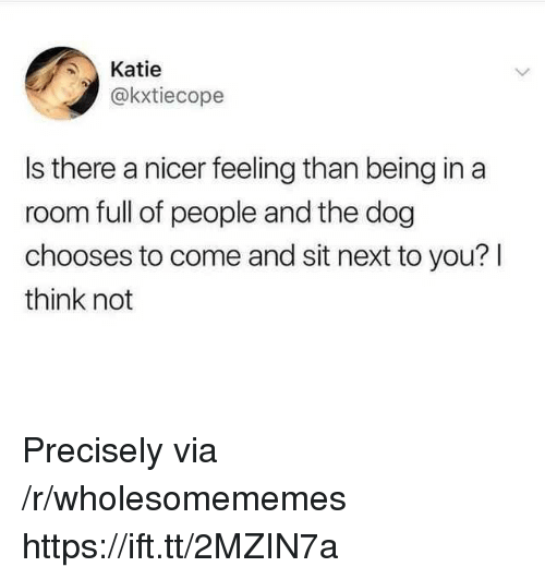 Dog, Next, and Via: Katie  @kxtiecope  Is there a nicer feeling than being in a  room full of people and the dog  chooses to come and sit next to you? l  think not Precisely via /r/wholesomememes https://ift.tt/2MZIN7a