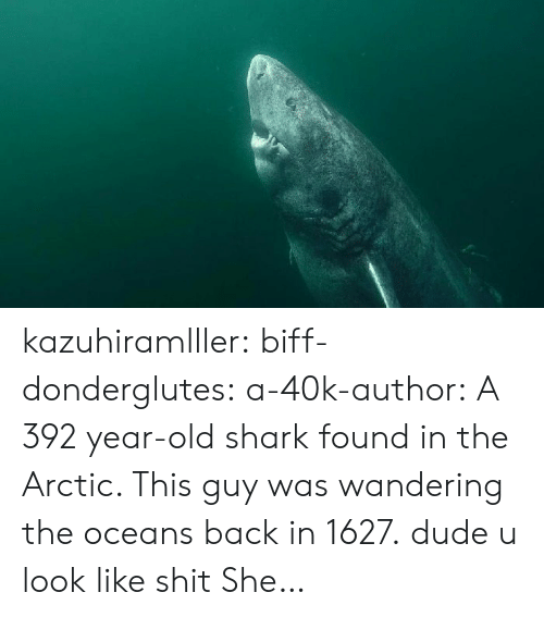 Dude, Shit, and Tumblr: kazuhiramlller: biff-donderglutes:   a-40k-author: A 392 year-old shark found in the Arctic. This guy was wandering the oceans back in 1627. dude u look like shit   She…