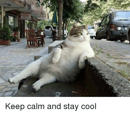 Image result for stay cool meme