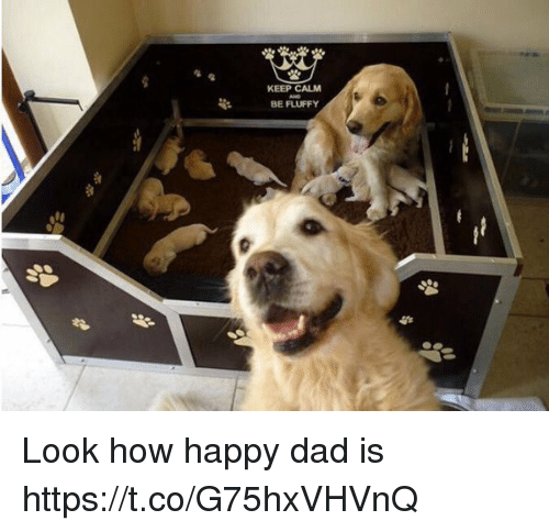 Dad, Happy, and Keep Calm: KEEP CALM  BE FLUFFY Look how happy dad is https://t.co/G75hxVHVnQ