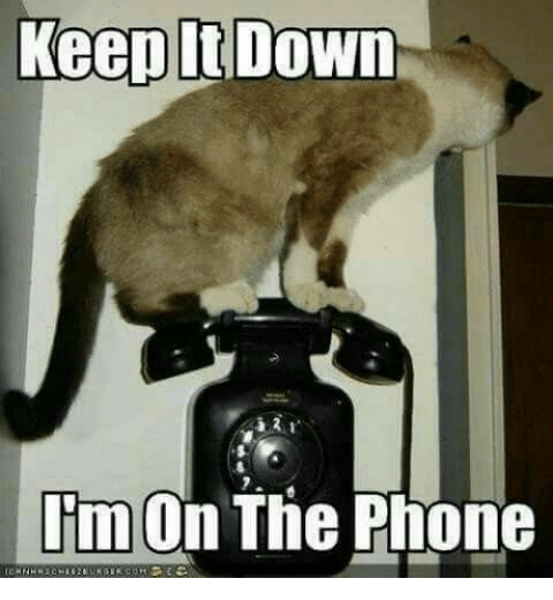 Phone, Down, and  Keep It Down: Keep It Down  I'm On The Phone