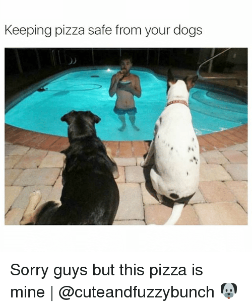 Dogs, Memes, and Pizza: Keeping pizza safe from your dogs  O) Sorry guys but this pizza is mine | @cuteandfuzzybunch 🐶