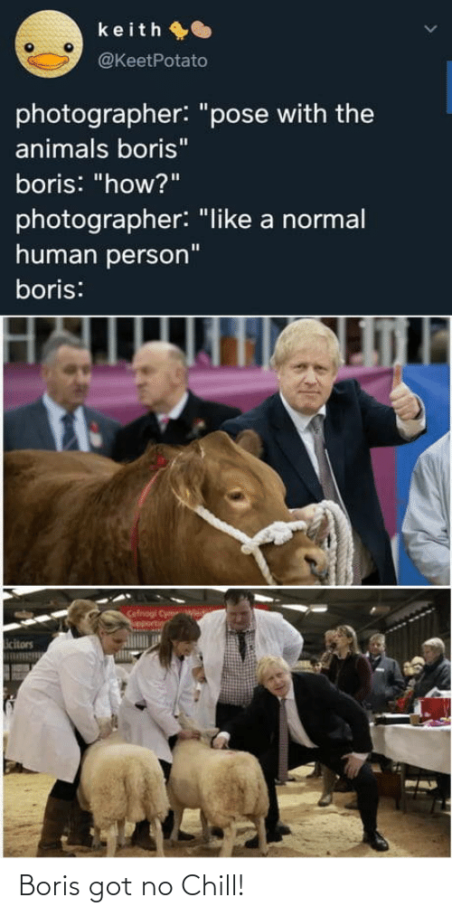 "normal: keith O  @KeetPotato  photographer: ""pose with the  animals boris""  boris: ""how?""  photographer: ""like a normal  human person""  boris:  Cefnogi Cym  upportin  icitors Boris got no Chill!"