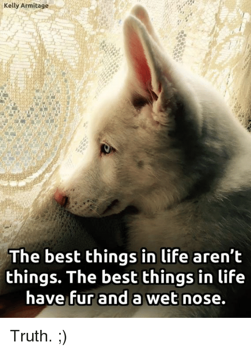 kelli: Kelly Armitage  The best things in life aren't  things. The best things in life  have fur and a wet nose. Truth. ;)