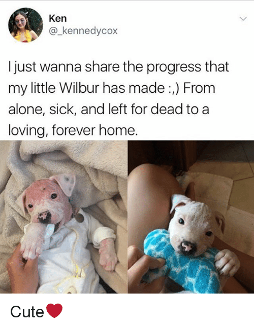 kenning: Ken  @kennedycox  I just wanna share the progress that  my little Wilbur has made :,) From  alone, sick, and left for dead to a  loving, forever home. Cute❤️