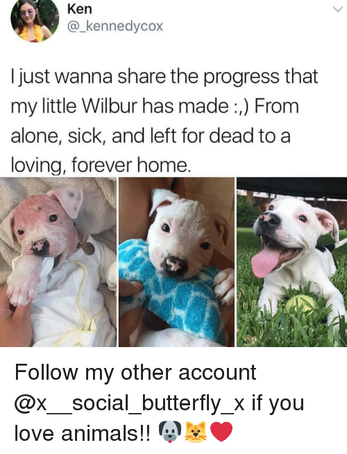 Love Animals: Ken  @_kennedycox  I just wanna share the progress that  my little Wilbur has made:,) From  alone, sick, and left for dead to a  loving, forever home. Follow my other account @x__social_butterfly_x if you love animals!! 🐶🐱❤