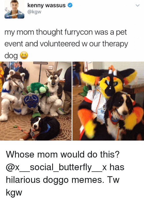 Memes, Butterfly, and Hilarious: kenny wassus  @kgw  my mom thought furrycon was a pet  event and volunteered w our therapy Whose mom would do this? @x__social_butterfly__x has hilarious doggo memes. Tw kgw