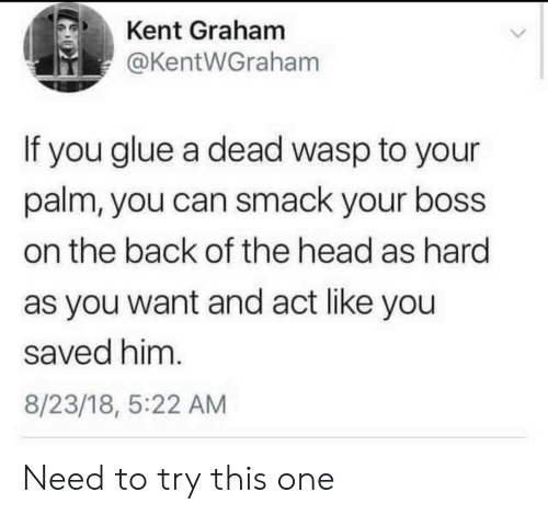 wasp: Kent Graham  @KentWGraham  If you glue a dead wasp to your  palm, you can smack your boss  on the back of the head as hard  as you want and act like you  saved him.  8/23/18, 5:22 AM Need to try this one