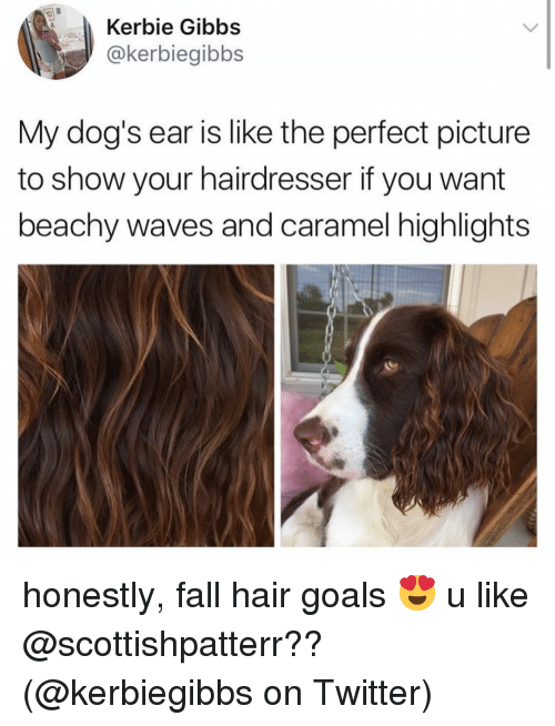 Dogs, Fall, and Goals: Kerbie Gibbs  @kerbiegibbs  My dog's ear is like the perfect picture  to show your hairdresser if you want  beachy waves and caramel highlights honestly, fall hair goals 😍 u like @scottishpatterr?? (@kerbiegibbs on Twitter)