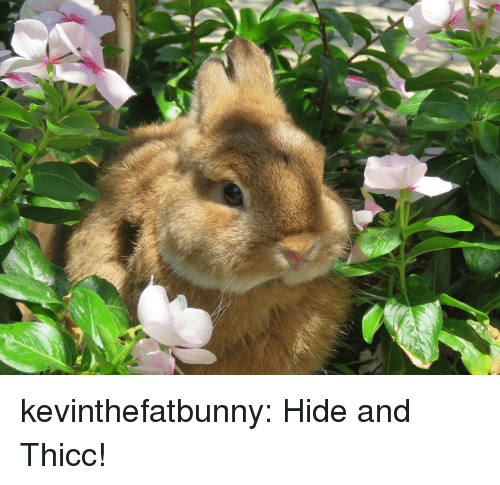 Tumblr, Blog, and Com: kevinthefatbunny:  Hide and Thicc!