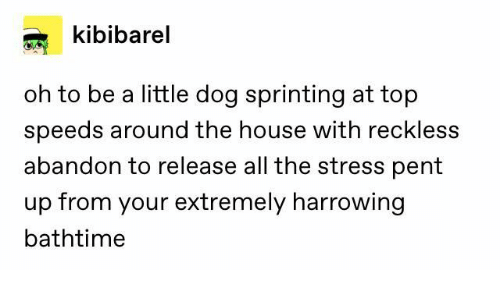 House, All The, and Dog: kibibarel  oh to be a little dog sprinting at top  speeds around the house with reckless  abandon to release all the stress pent  up from your extremely harrowing  bathtime