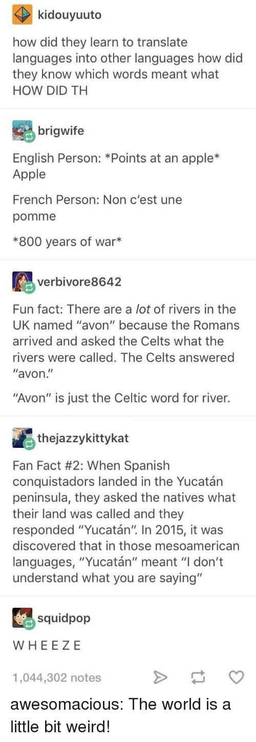 "Avon: kidouyuuto  how did they learn to translate  languages into other languages how did  they know which words meant what  HOW DID TH  brigwife  English Person: *Points at an apple*  Apple  French Person: Non c'est une  pomme  *800 years of war*  verbivore8642  Fun fact: There are a lot of rivers in thee  UK named ""avon"" because the Romans  arrived and asked the Celts what the  rivers were called. The Celts answered  ""avon  ""Avon"" is just the Celtic word for river.  thejazzykittykat  Fan Fact #2: When Spanish  conquistadors landed in the Yucatán  peninsula, they asked the natives what  their land was called and they  responded ""Yucatán"" In 2015, it was  discovered that in those mesoamerican  languages, ""Yucatán"" meant ""I don't  understand what you are saying""  squidpop  WHEE ZE  1,044,302 notes awesomacious:  The world is a little bit weird!"