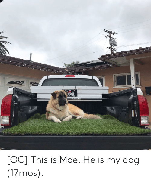 Moe., Dog, and All: KILL 'EM ALL  51  D SORT 'EM OUT  515 [OC] This is Moe. He is my dog (17mos).