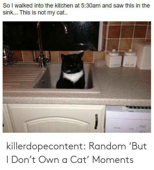 Theyre: killerdopecontent:  Random 'But I Don't Own a Cat' Moments