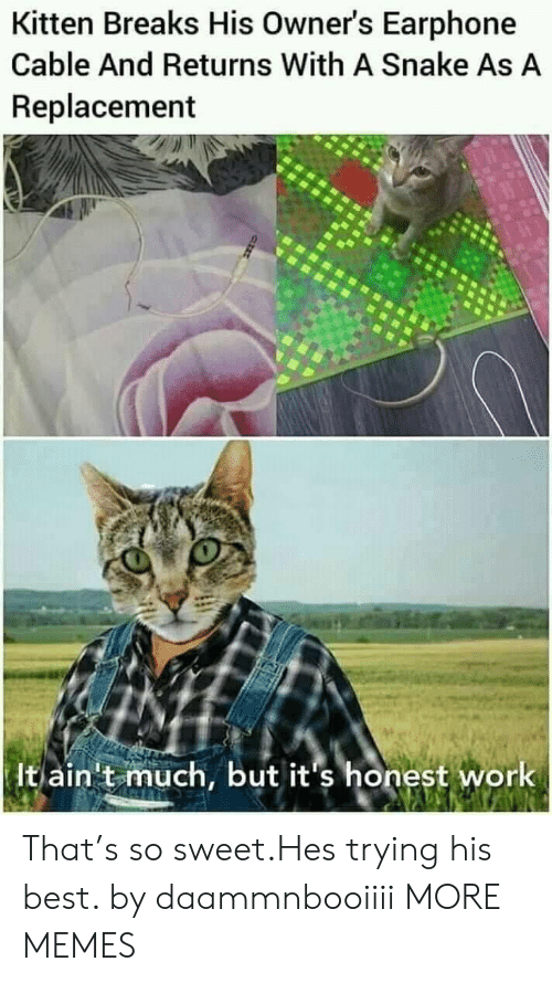 cable: Kitten Breaks His Owner's Earphone  Cable And Returns With A Snake As A  Replacement  It ain't much, but it's honest work That's so sweet.Hes trying his best. by daammnbooiiii MORE MEMES