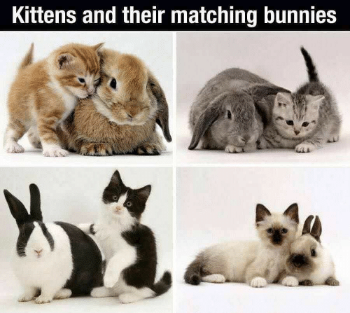Bunnies, Kittens, and Their: Kittens and their matching bunnies