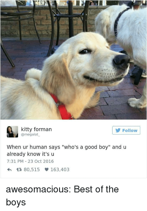"Tumblr, Best, and Blog: kitty forman  @megalot  Follow  When ur human says ""who's a good boy"" and u  already know it'su  7:31 PM 23 Oct 2016  h 80,515 163,403 awesomacious:  Best of the boys"