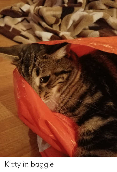 Kitty and Baggie: Kitty in baggie