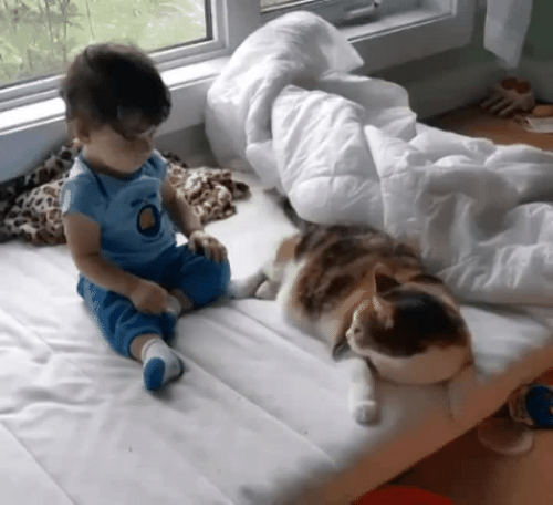 Okay, Her, and Human: Kitty Volunteers as Pillow For Her Human
