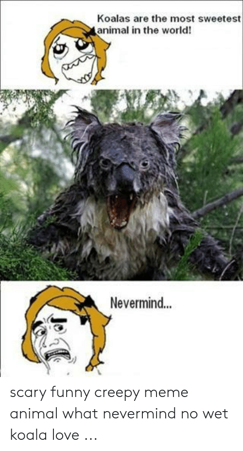 Creepy, Funny, and Love: Koalas are the most sweetest  animal in the world!  Nevermind... scary funny creepy meme animal what nevermind no wet koala love ...