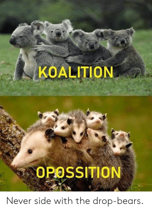 Dank, Bears, and Never: KOALITION  OPOSSITION Never side with the drop-bears.