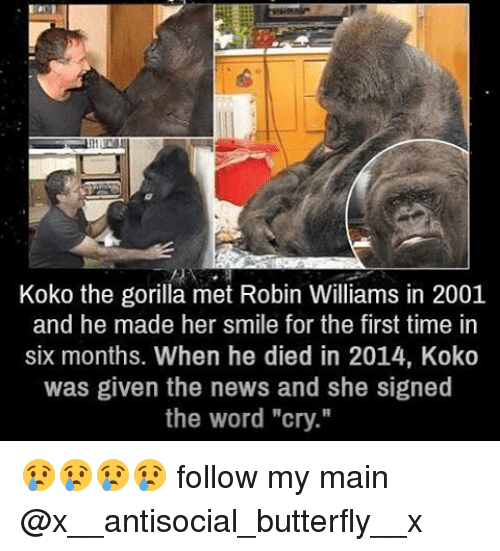 """Antisociable: Koko the gorilla met Robin Williams in 2001  and he made her smile for the first time in  six months. When he died in 2014, Koko  was given the news and she signed  the word """"cry."""" 😢😢😢😢 follow my main @x__antisocial_butterfly__x"""