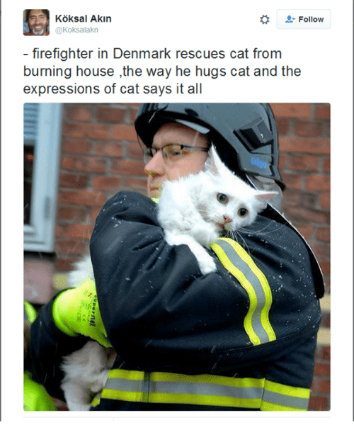 Akinators: Koksal Akin  Follow  @Koksalakn  firefighter in Denmark rescues cat from  burning house ,the way he hugs cat and the  expressions of cat says it all