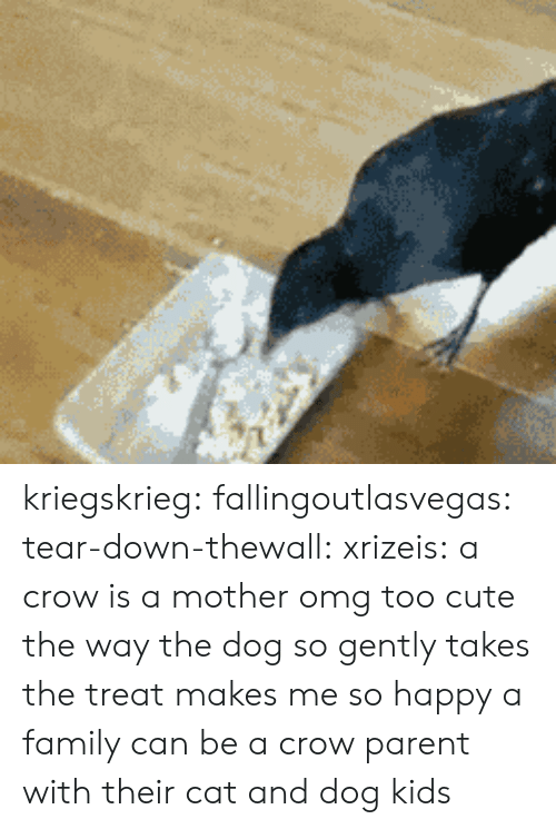 Cute, Family, and Omg: kriegskrieg: fallingoutlasvegas:  tear-down-thewall:  xrizeis:  a crow is a mother  omg too cute  the way the dog so gently takes the treat makes me so happy  a family can be a crow parent with their cat and dog kids
