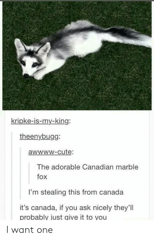 marble: kripke-is-my-king:  theenybugg:  awwwW-cute:  The adorable Canadian marble  fox  I'm stealing this from canada  it's canada, if you ask nicely they'll  probably just give it to you I want one