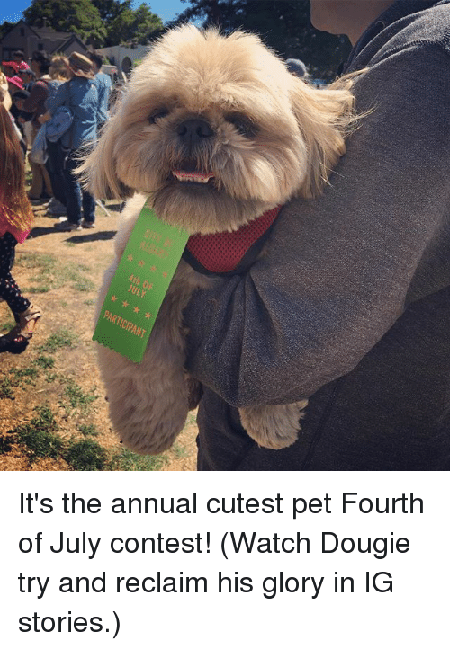 annuale: kth OP  ULY  PARTICIPANT It's the annual cutest pet Fourth of July contest! (Watch Dougie try and reclaim his glory in IG stories.)